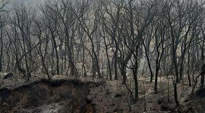 Gli incendi in Algeria hanno ucciso 65 persone