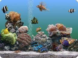 הורדה שומר מסך אקווריום   Marine aquarium
