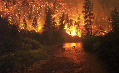 [Image: Wildfire-Stunning-Public-Domain-460x284.jpg]