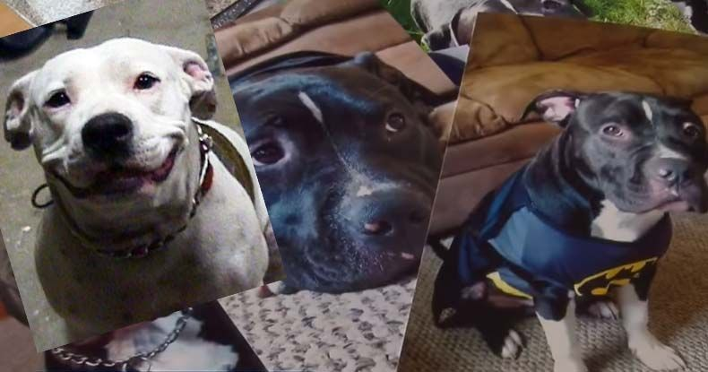 Two Days of Pot Raids Turns into Dog Killing Spree -- Innocent Woman Shot at, Toddler Terrorized