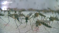 Mosquito / Mosquito: Judgment Day For A Killer (2017) PL.HDTV.1080i.h264-Sante / POLSKI LEKTOR