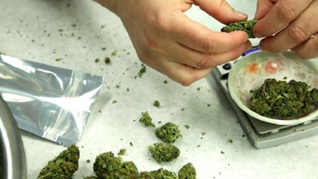 Police begin crackdown on marijuana dispensaries across the GTA