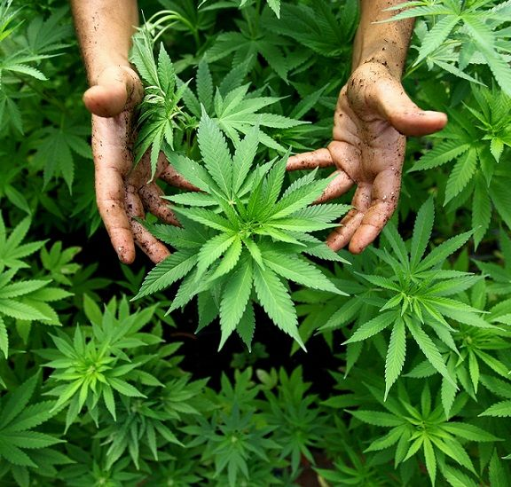 Buying A Former Marijuana Grow-Op As Your Primary Residence - Toronto Real Estate Property Sales & Investments   Toronto Realty Blog by David Fleming