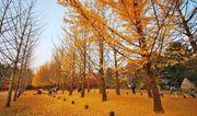 十大韓國紅葉追楓熱點攻略2014– 市區篇