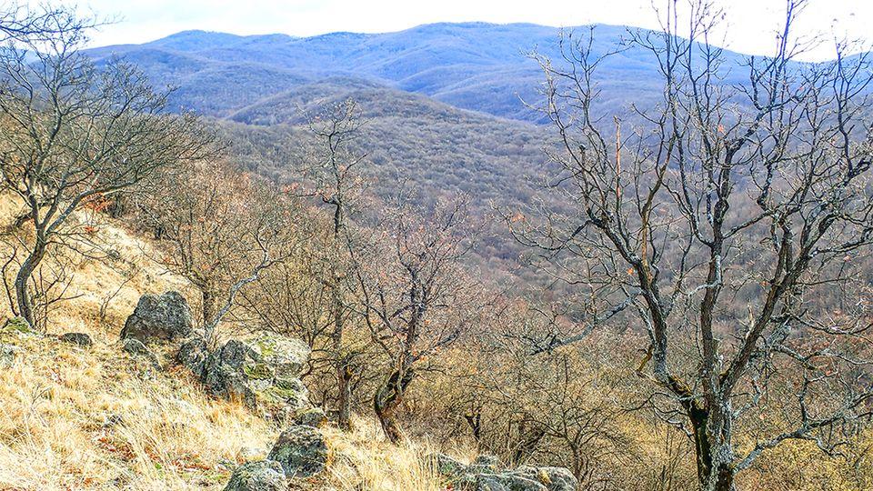 Nagybörzsönyből a Magyar-hegyre