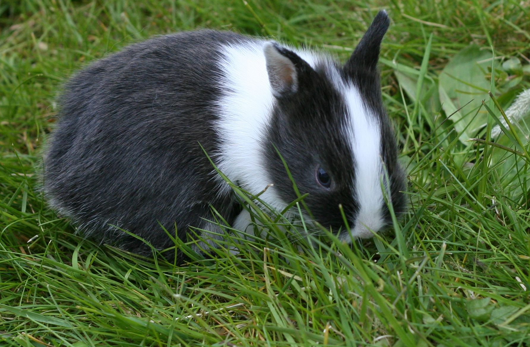 מידע על הארנבים