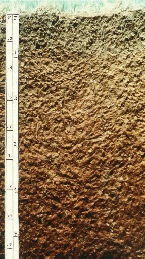 淋溶土 Image