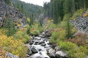 Crooked Creek in Gospel Hump Wilderness.jpg
