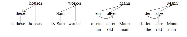 Morphological dependencies 1