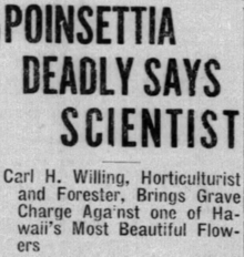 """A newspaper clipping; the headline says """"Poinsettia Deadly Says Scientist"""", while the subtitle says """"Carl H. Willing"""", Horticulturalist and Forester, Brings Grave Charge Against one of Hawaii's Most Beautiful Flowers"""""""