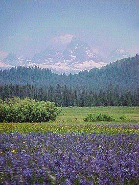 Teton Range from Caribou NF.JPG