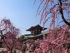 Hofu Tenmangu & Japanese apricot.JPG