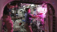 File:ScienceCasts- Historic Vegetable Moment on the Space Station.webm