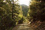 从森林中穿过的一条路