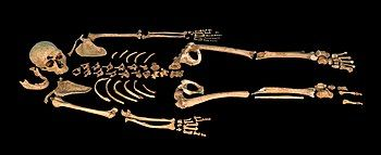 A mostly complete skeleton laid out against a black background horizontally