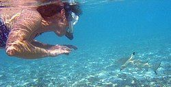 Photo of snorkeler with shark in shallow water.
