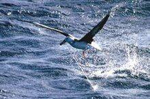Photo of bird struggling to fly away