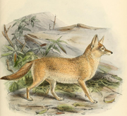 Painting of a light brown fox