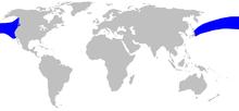 Cetacea range map Hubbs Beaked Whale.png