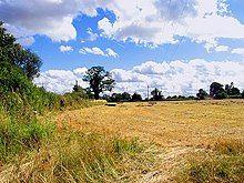 A field of cut crops