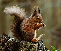 Squirrel posing.jpg