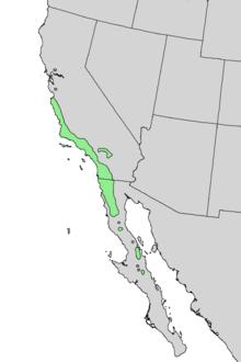 Prunus ilicifolia range map 3.png