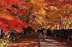 131130 Komyoji Nagaokakyo Kyoto pref Japan01s3.jpg
