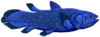 Coelacanth flipped.png