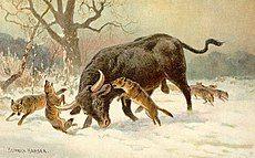 Long horned european wild ox.jpg