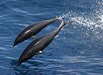 Anim1749 - Flickr - NOAA Photo Library.jpg
