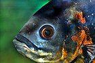 Fish surveying its world