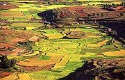 terraced emerald paddy fields checker softly rolling hills