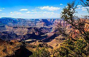 Canyon River Tree (165872763).jpeg