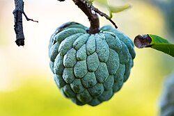 Annona squamosa fruit.jpg