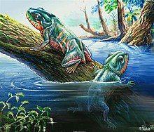 Triadobatrachus massinoti