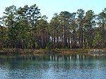 阿巴拉契科拉国家森林的FH-111号人工池塘
