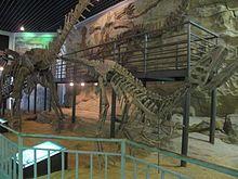 Szechuanosaurus campi - IMG 1247.JPG