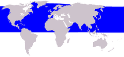 Cetacea range map Minke Whale.png