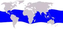 Cetacea range map Melon-headed Whale.PNG