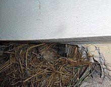 Sparrow in a ventilator