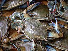 Blue crab on market in Piraeus - Callinectes sapidus Rathbun 20020819-317.jpg