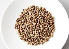 Barley grains 3.jpg