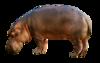 Hippopotamus-2780699 1280.png