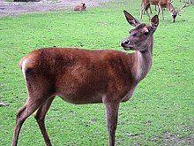 Zoo-Dortmund-IMG 5549-a.jpg