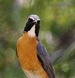 Nightingale yelpin.jpg