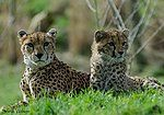 Mother & Daughter (30717330985).jpg