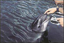 Porpoise touching.jpg