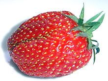 Closeup of a healthy, red strawberry