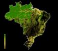 FLII Brazil.png