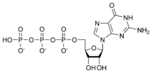 Chemical structure of guanosine triphosphate